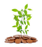 Small plant growing from coins isolated on white background. Royalty Free Stock Photography