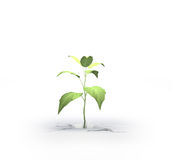 Small plant growing from a crack. In the ground isolated on white royalty free stock photos