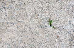 Growing Plant Between Crack Concrete royalty free stock image