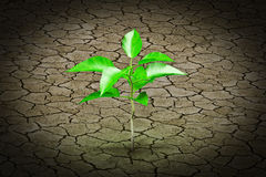 Small plant growing from  cracked earth Stock Photos