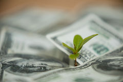 Small plant growing on currency note Royalty Free Stock Photo