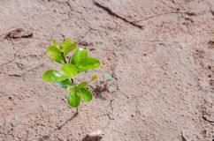 Small plant growing on dirty ground Royalty Free Stock Photos