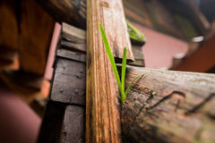 Small plant growing on floor Royalty Free Stock Images