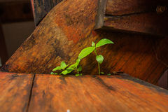 Small plant growing on floor Royalty Free Stock Photos