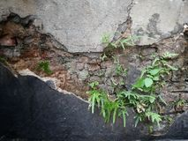 Small plant growing on old brick wall Stock Photo