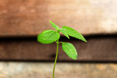 Small plant growing Stock Images