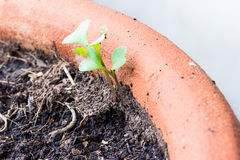 small plant is growing represent to hope, start of life Stock Image