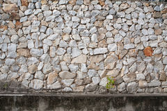 Small or plant growing on the rock wall Royalty Free Stock Photo