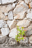 Small or plant growing on the rock wall Stock Photography