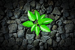 Small plant growing from a stone Stock Images