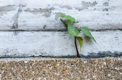 Small plant growing from wall Stock Photo