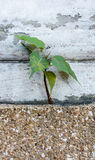 Small plant growing from wall Stock Image