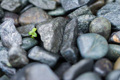 Small Plant Grows Through Big Rocks Stock Photo