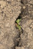 A small plant grows out of a crack in the ground royalty free stock photo