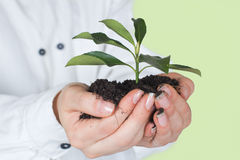 Small plant growth Royalty Free Stock Photo