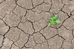 Small Plant Growth Between Cracked Soil Royalty Free Stock Photography