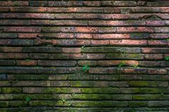 Small plant growth on old red brown brick wall texture background stock images
