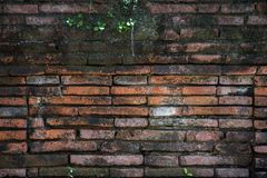 Small plant growth on old red brown brick wall texture background stock image