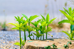 Small plant growth strong in natural stone ground. Stock Photos