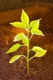 Small plant Royalty Free Stock Photos