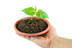 Small plant in hand Stock Image