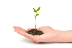 Small plant in hand Stock Photos