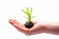 Small plant in hand Royalty Free Stock Photo