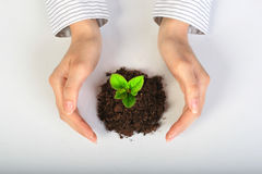 Free Small Plant In Hands. Stock Photo - 14434150
