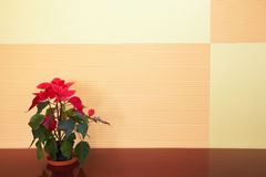 Free Small Plant In Office Stock Photo - 4379660