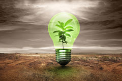 Small plant inside light bulb in cracked land Stock Image