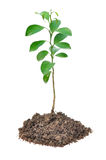Small plant isolated Stock Photos