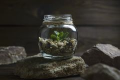 Small plant in a jar royalty free stock images