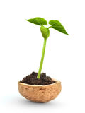 Small plant in a nutshell Stock Photos