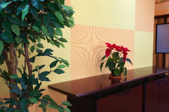Small plant in office lobby. Small plant against an orange block pattern in an office lobby on a brown cabinet top with a evergreen tree on the side Stock Images