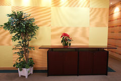 Small plant in office lobby. Small plant against an orange block pattern in an office lobby on a brown cabinet top with a evergreen tree on the side Stock Photography