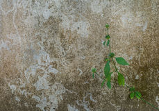 Small plant and old cement wall texture background. Royalty Free Stock Photos