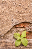 Small plant on old wall Stock Photos