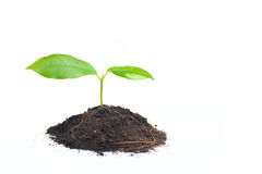 Small plant Stock Image
