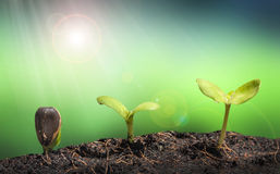 Small plant on pile of soil with Lens flare Stock Photos