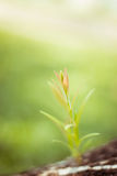 Small plant on pile of soil, part of it reflected Stock Photo