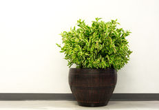 A small plant pot Royalty Free Stock Images
