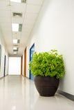 A small plant pot Stock Photo