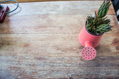 A small plant pot displayed in the window Stock Photography