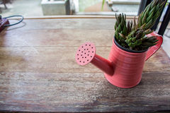 A small plant pot displayed in the window Stock Image