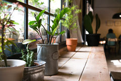 A small plant pot. Displayed in the window Royalty Free Stock Image