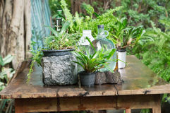 Small plant pot. On the table Stock Photo