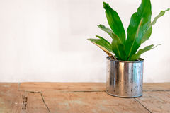 A small plant pot. On table Royalty Free Stock Images