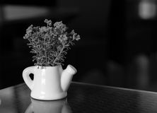SMALL PLANT POTTED IN WATERING POT ON TABLETOP royalty free stock images