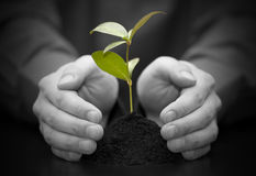 Small plant protected by hands Royalty Free Stock Photos