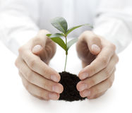 Small plant protected by hands. Small green plant protected by hands royalty free stock photos